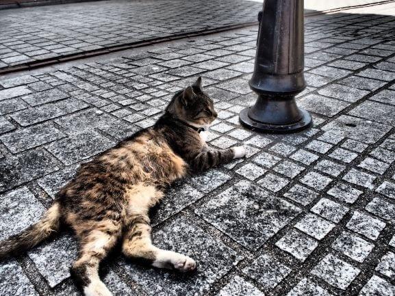 kocia sprzedaż kot na podwórku