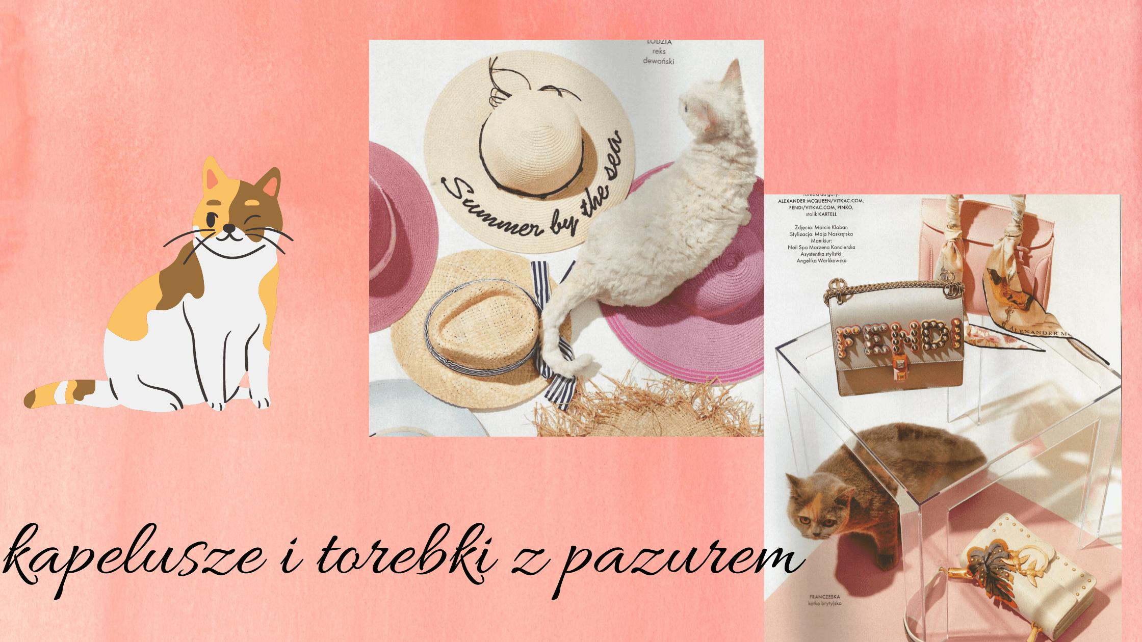 baner różowy z kocimi dodatkami i kotem