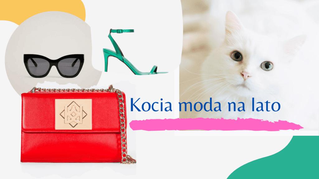 kot w modzie okulary torebka z kotem