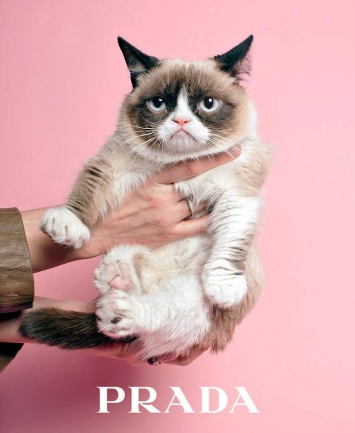kot w modzie kot Prada na dłoniach