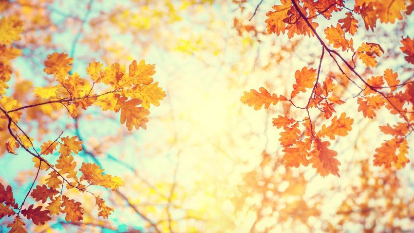 jesienny beż