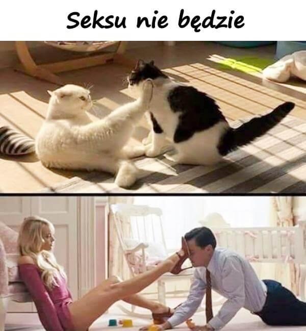 seks nie wychodzi mem z kotem